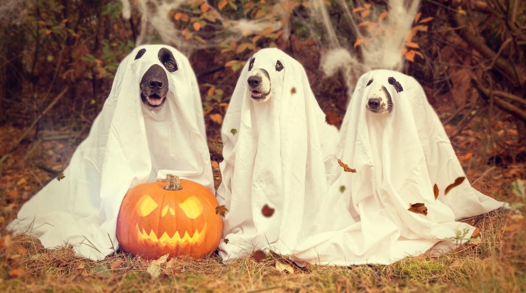 Last minute Halloween plans at home